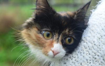 Ein katt fortred